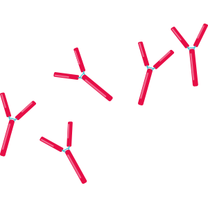M protein from myeloma cells