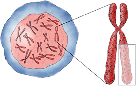 Healthy stem cell and chromosome 5