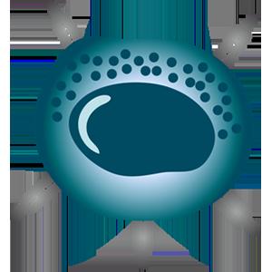 NK cells (lymphocytes)